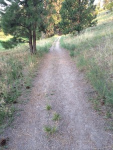 Trail near Little Spokane River, Washington