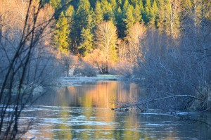 Little Spokane River, reflections